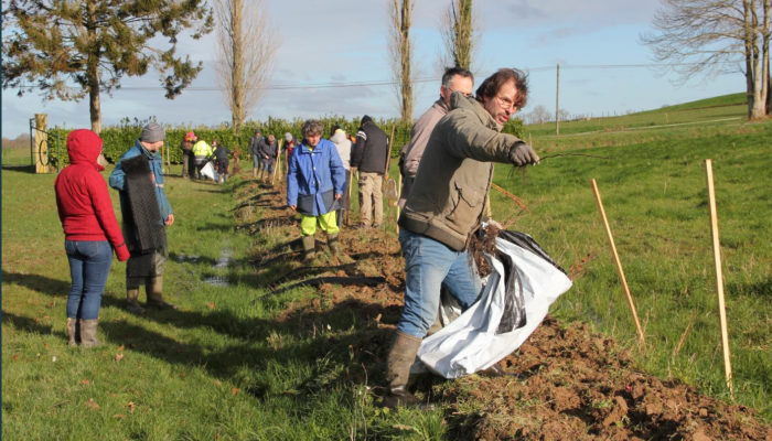 Plantation de haies bocageres - Bretagne romantique - syndicat du linon