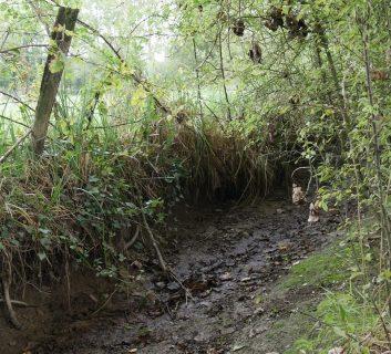 ruisseau en cours de restauration à Lanhélin
